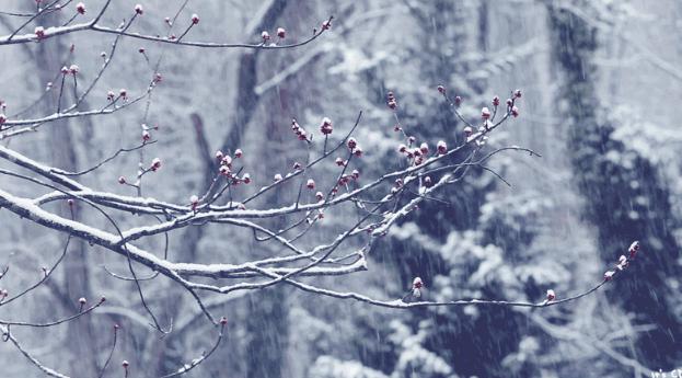 初雪的时候,你愿意和我一起吗?